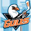 SD Gulls